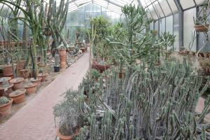 Serra delle succulente